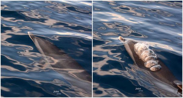 rencontre avec les dauphins en Martinique
