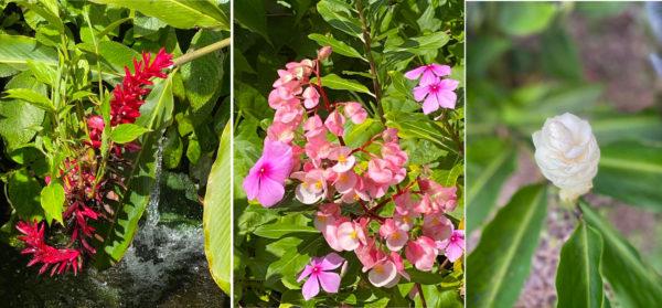 Des fleurs du Jardin de Depaz