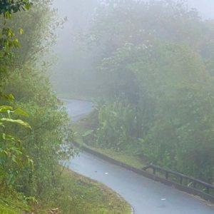 sur la route dans la foret tropicale de Martinique