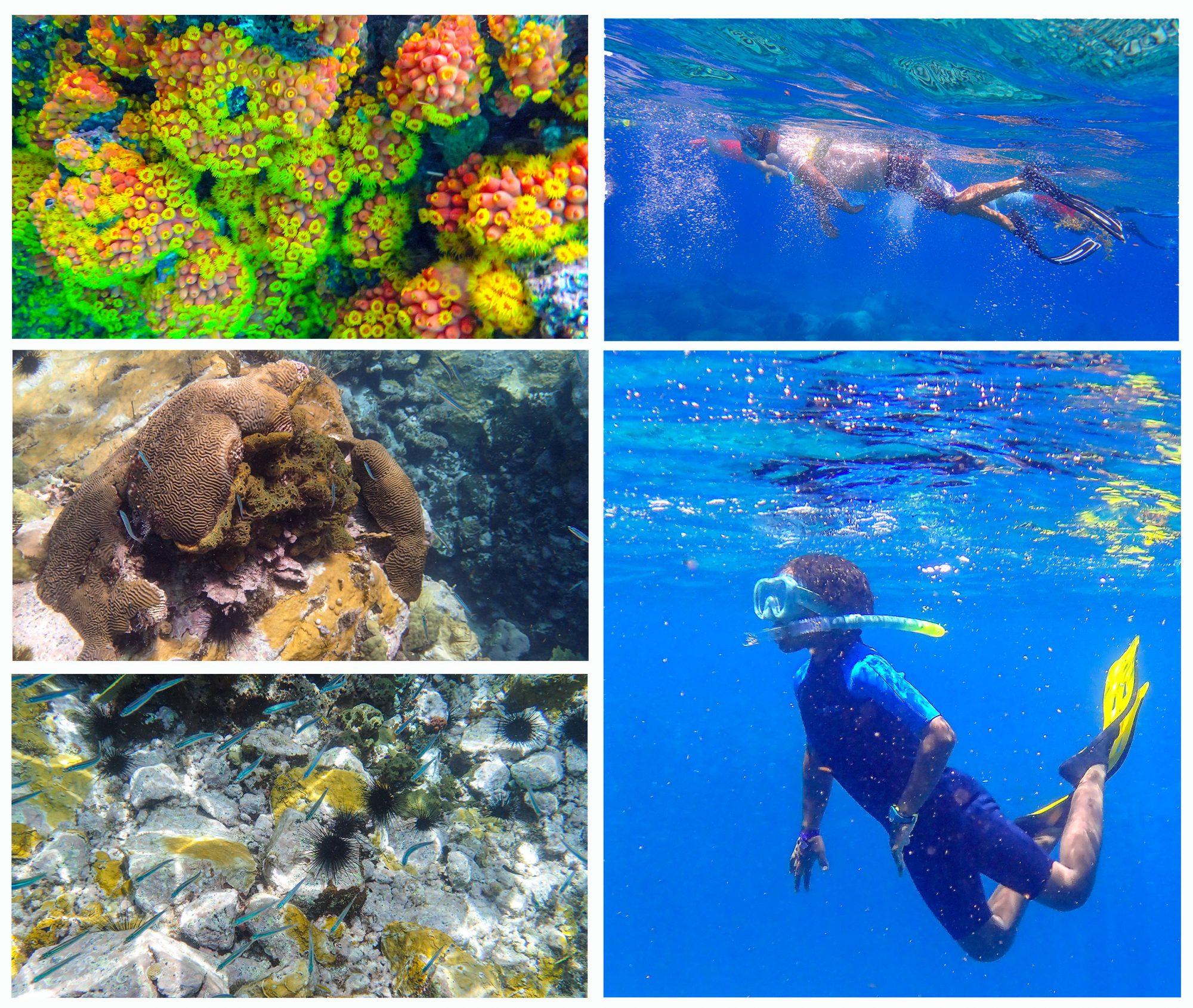 Plongée en mer Martinique